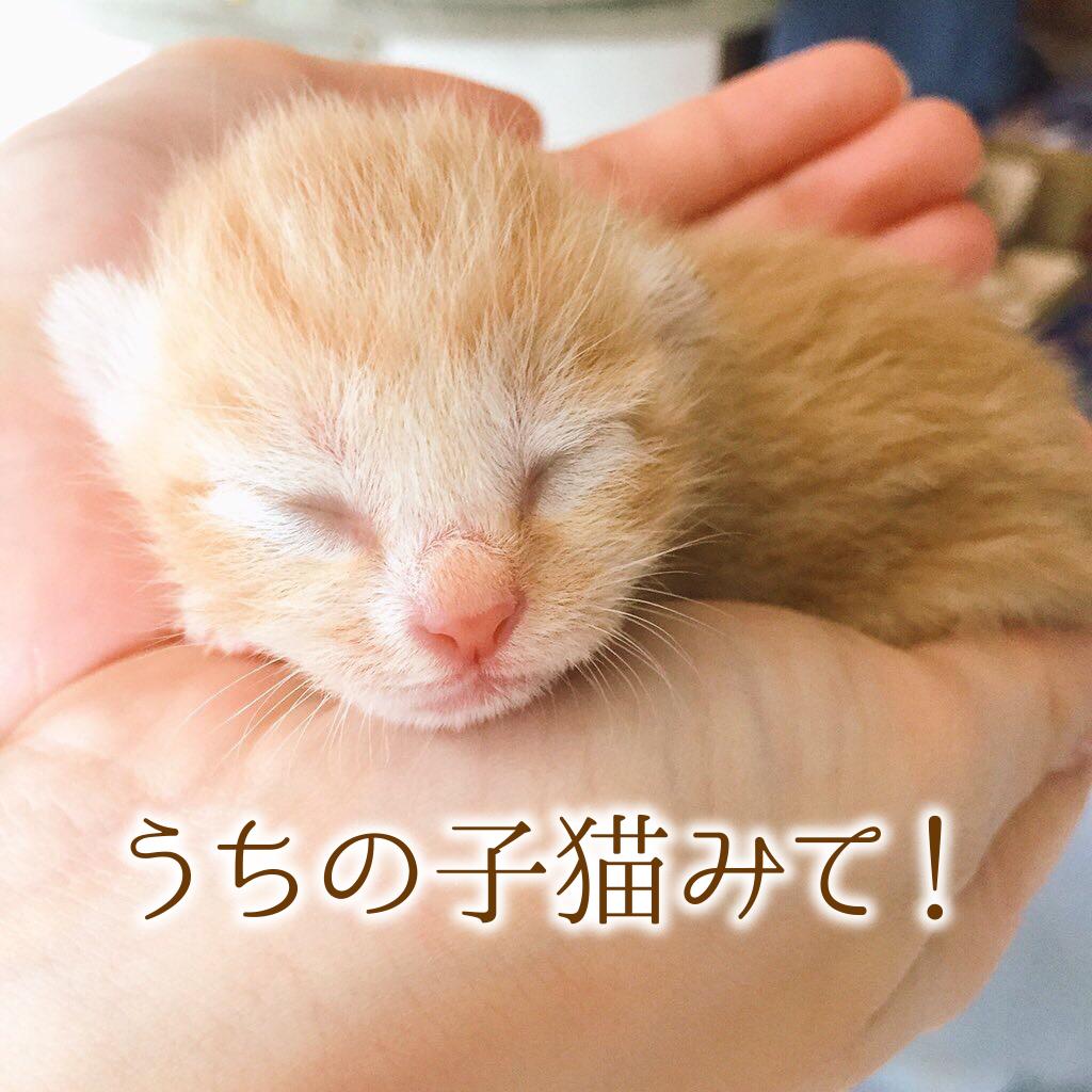 【2月22日は猫の日】子猫限定!うちの子見て!ホントかわいいから!悩んで選んだ30選…!